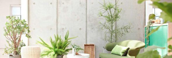 15 fabulosos beneficios para la salud de tener plantas en el interior