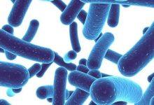 Los probióticos pueden ayudar a reducir el riesgo de aterosclerosis